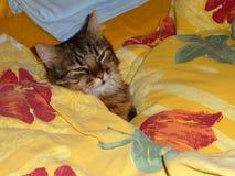 一只猫在床上 免版税库存照片