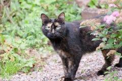 一只猫在庭院里 免版税库存照片
