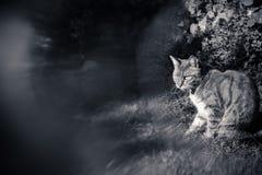 一只猫在有特别迷离作用的庭院里在黑白 免版税库存照片