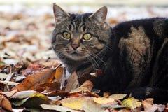 一只猫在秋天和冬天在狩猎 免版税库存照片