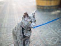 一只猫在巴塞罗那 库存图片