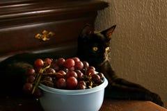 一只猫用葡萄 免版税图库摄影