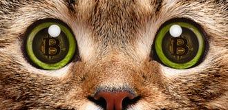 一只猫画象在眼睛的bitcoin的标志 图库摄影