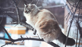一只猫的冬天画象在雪的 库存图片