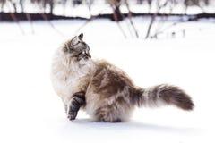 一只猫的冬天画象在雪的 库存照片