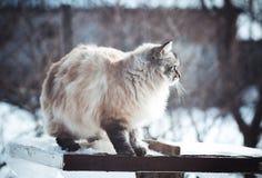 一只猫的冬天画象在雪的 图库摄影