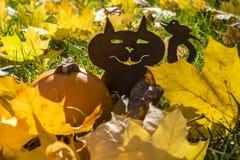 一只猫的剪影用在下落的叶子中的一个南瓜 库存图片