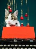 一只猫的愿望圣诞节的 免版税库存照片