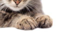 一只猫的爪子在白色背景的 库存照片