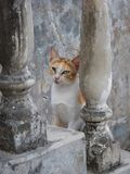 一只猫的画象在一个老台阶的 库存图片