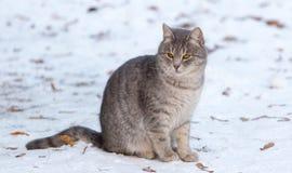 一只猫的画象在雪的在冬天 库存照片