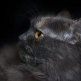 一只猫的纵向在配置文件的 免版税图库摄影