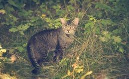 一只猫的葡萄酒照片在公园 库存照片