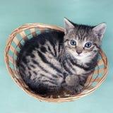 一只猫的顶视图在篮子的 库存照片