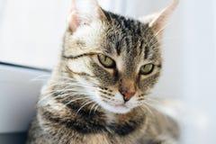 一只猫的轻的画象在窗口的 免版税库存图片