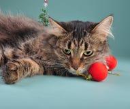 一只猫的画象在圣诞节材料中的 库存照片