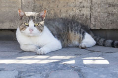 一只猫的画象在城市街道上的 库存图片