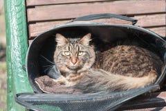 一只猫的画象在城市街道上的 免版税图库摄影