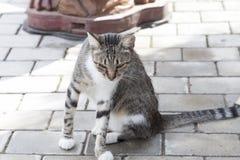 一只猫的画象在城市街道上的 图库摄影