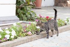 一只猫的画象在城市街道上的 库存照片