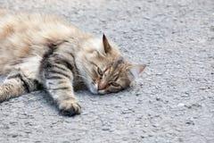 一只猫的画象在城市街道上的 免版税库存图片