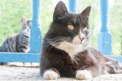 一只猫的画象在城市街道上的 免版税库存照片