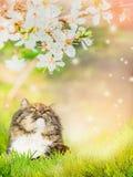 一只猫的画象在春天开花自然背景的  图库摄影