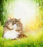 一只猫的画象在春天或夏天自然背景的与草 免版税库存图片