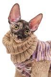 一只猫的画象在毛线衣的 库存图片