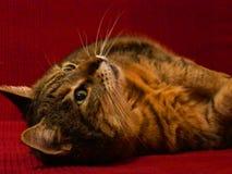一只猫 图库摄影