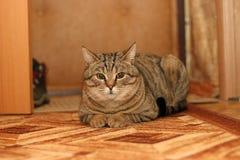 一只猫 免版税库存照片