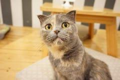 一只猫! 库存照片