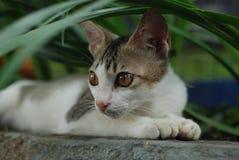 一只猫 库存照片