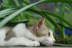 一只猫 库存图片