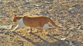 一只甜猫在非洲 免版税库存图片