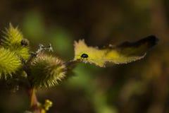 一只甲虫的照片在叶子的 库存图片