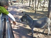 一只男孩和驮货驴子在徒步旅行队公园 库存照片