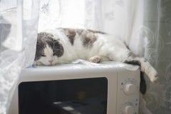 一只疲乏的滑稽的猫在微波的腹部说谎在厨房里 免版税图库摄影