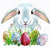 一只白色兔子的水彩例证用鸡蛋和草 免版税库存图片