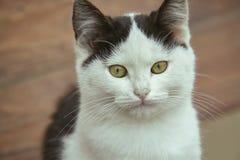 一只白色小猫的特写镜头与交通事故多发地段的 库存照片