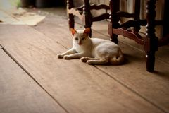 一只白色猫坐一个假日的街道 免版税库存图片