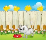 一只白色猫用狗食和四只黄色鸟 免版税库存图片
