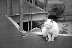 一只白色猫 免版税库存照片