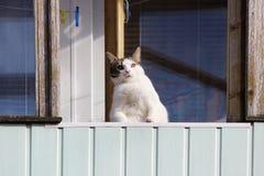 一只白色肥胖猫在春天坐一个阳台并且注视从那里的路人 免版税库存图片