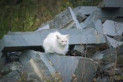 一只白色蓬松街道猫 库存照片