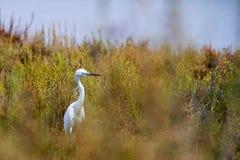一只白色鸟 免版税库存图片