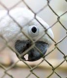 一只白色鹦鹉的画象在笼子的 免版税库存图片