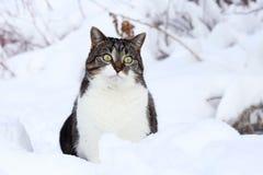 一只相当小的棕色白的猫在雪坐好奇地 图库摄影