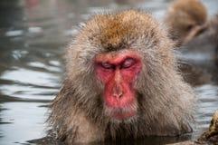 一只短尾猿在温泉长野县,日本 免版税图库摄影