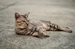 一只离群平纹逗人喜爱的猫 免版税库存图片